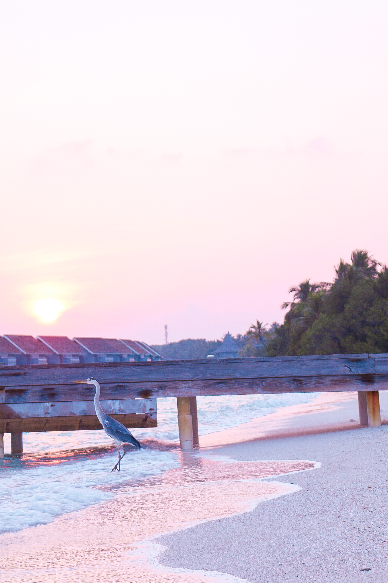 The Maldives, Maldives, Maldives honeymoon, Maldives Q&A, Maldives review, Maldives Kuramathi, Kuramathi resort, Kuramathi island, kuramathi honeymoon, dizzybrunette3 maldives